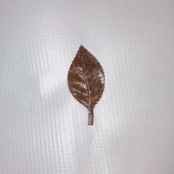 Pressed Leaf - ART20-38 ART20-39